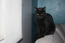 Magnifique Chat Noir Au Regard...