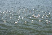 High Angle View Of Seagulls Swimming On Lake In Lake