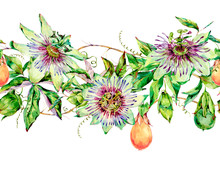 Watercolor Passiflora Seamless Pattern, Flowers, Leaves. Vintage Floral Natural Texture