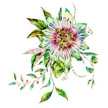 Watercolor Passiflora Greeting Card, Flowers, Leaves. Vintage Floral