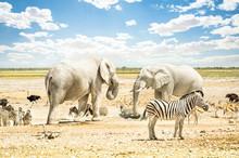 Elephants And Zebras On Landscape Against Sky