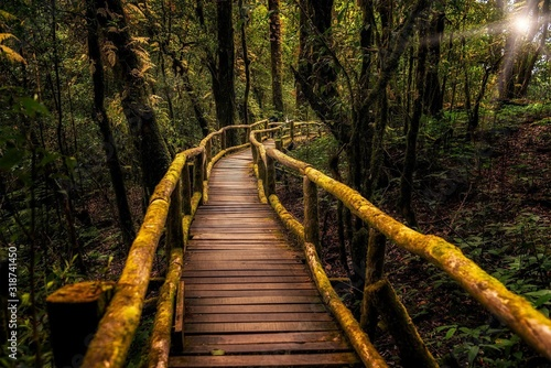 Photo Footbridge Amidst Trees In Forest