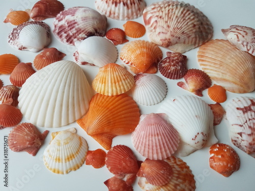 Cuadros en Lienzo Close-Up Of Seashells On Table