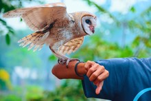 Cropped Hand Of Man With Owl A...