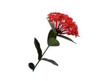 Red Flower For Flower Frame Or...
