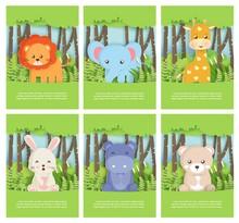 Set Of Zoo Animal With Leo , E...