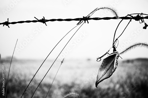 Fotografía Reeds swaying in the wind across barbed wire