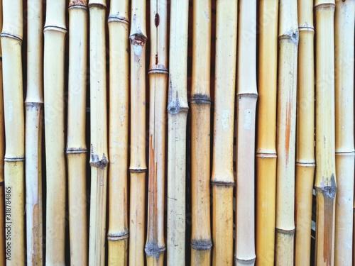 Fotomural Full Farme Shot Of Bamboos