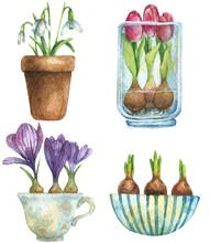 Watercolor Set Of Spring Flow...