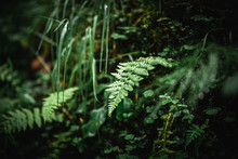 Close Up Of Green Moss And Fern Plants In A Dark Forest In The Alps.