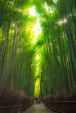 Fototapeta Na drzwi - Beautiful Bamboo Forest in Japan during Sunny Bright Weather