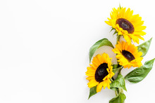 Bouquet Of Sunflowers On White Background Top-down Copy Space