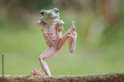 Canvas Print Full length portrait of frog standing on stick