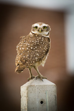 Close-Up Of Owl Perching On Post