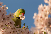 Low Angle View Of Parrot On Ch...