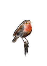Watercolor Bird Robin Hand Dra...