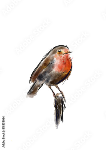Photo Watercolor bird robin hand draw painting illustration