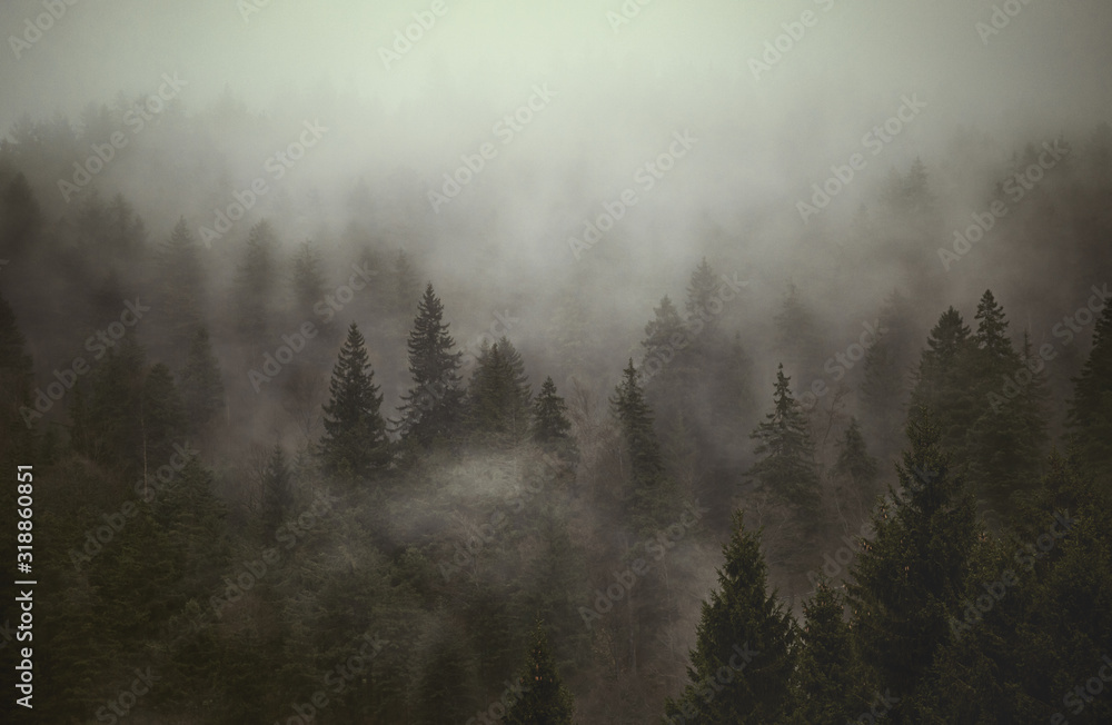 Fototapeta TREES IN FOREST DURING FOGGY WEATHER