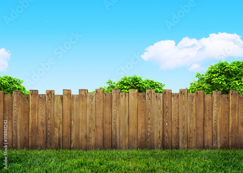 tree in garden and wooden backyard fence with grass Fototapeta