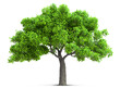 tree isolated with high detailed leaves, 3D illustration