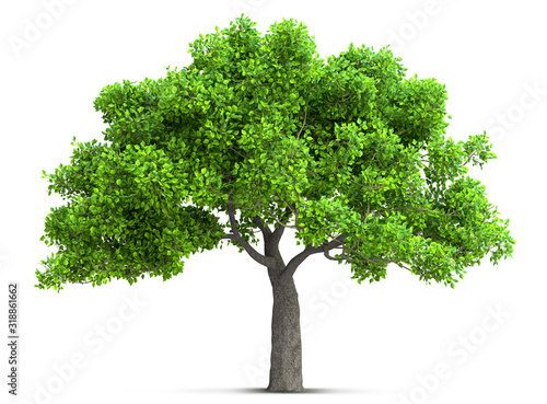 tree isolated with high detailed leaves, 3D illustration Canvas