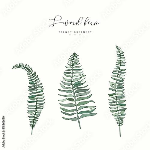 Fotografía Sword fern branch or leaf