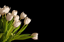 Bunch Of White Tulips Isolated On Black Background With Copy Space