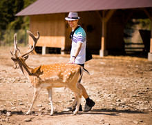 Tourist Man In Forest Zoo Touches Sika Deer