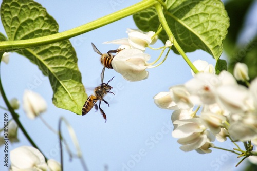 Photo Close-Up Of Bee Pollinating Flower