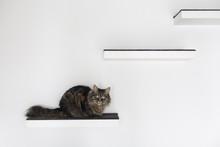 Beautiful Cat Lying On A Shelf At Home