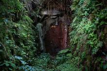 Geheimnisvolle Bunker Tür Versteckt Im Wald