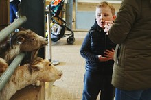 Cute Boy With Mother Looking At Goats In Farm