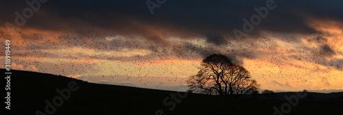Silhouette Flock Of Birds Flying Over Field Against Sky During Sunset