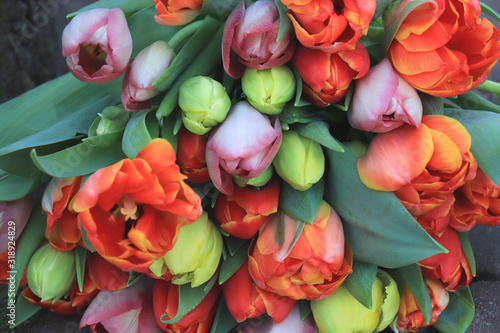 Red and orange tulips #318924829