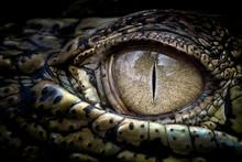 Cropped Eye Of Crocodile