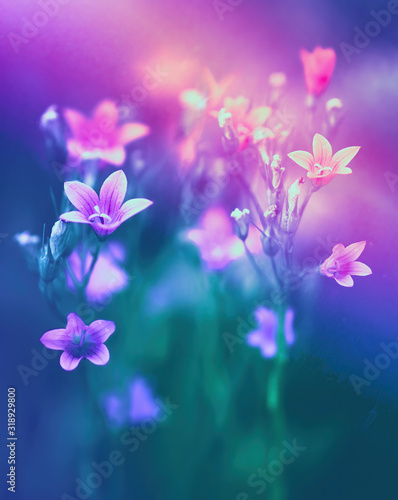 Beautiful bell flowers in nature in evening sunset close-up macro in in dark green and purple pink tones Canvas Print
