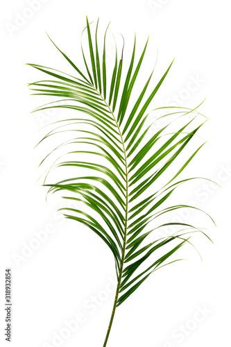 egzotyczny-tropikalny-lisc-odizolowywajacy-na-bialym-tle