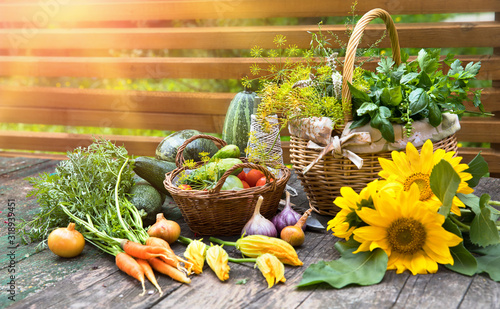 Fototapeta Gardening farming fresh organic vegetables and spicy herb with bed. Still life with wicker basket basil and parsley on old wooden board in rustic style side view. obraz