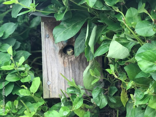 Fototapeta Close-Up Of Bird In Birdhouse