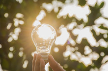 Close-Up Of Person Holding Light Bulb Against Trees