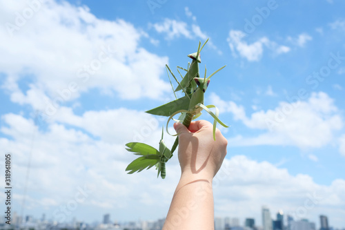 Fotografie, Tablou Cropped Hand Holding Grasshoppers Made From Leaves Against Sky