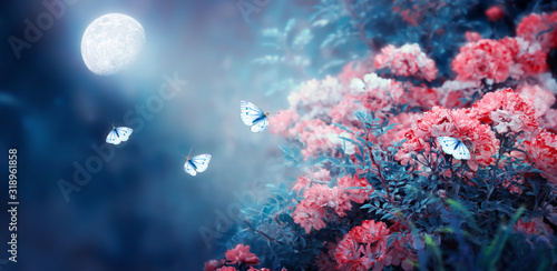Fototapety, obrazy: Magical fantasy enchanted fairy tale landscape with fabulous fairytale blooming pink rose flower garden and flying butterflies on blurred mysterious blue background and shiny glowing moon ray in night
