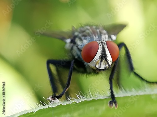 Close-Up Of Fly On Leaf