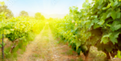 Blurred backdrop with sunny landscape of vineyard Wallpaper Mural