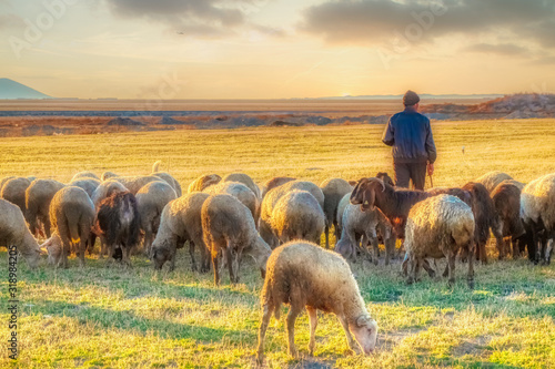 Canvas-taulu sheep and shepherd at sunset