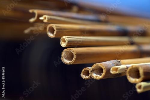 Fotomural Close-Up Of Bamboos