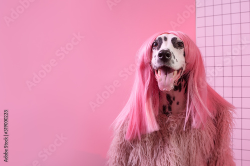 Photo Adorable dalmatian lady dog in pink wig on pink background