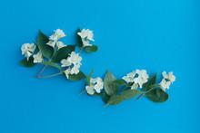 Sprigs Of Spring Fragrant Whit...