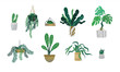 Green tropical house plant set isolated