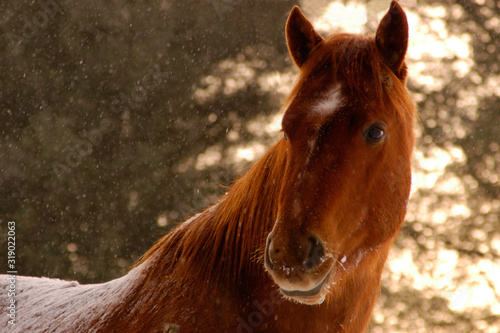 Horse and Snow